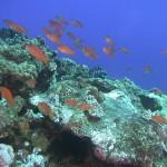 2012年2月16日(木) 「サンゴの海のいきものたち」参考画像